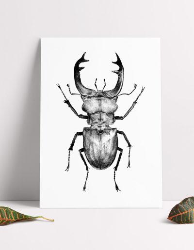 Lucnus-Cervus-print
