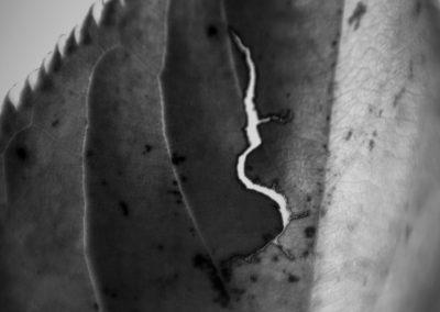Extinction scars